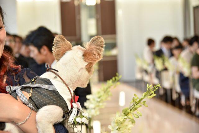 少人数結婚式,15次会,ウェディング,ペット同伴挙式